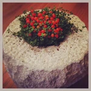 コケサンゴ鉢