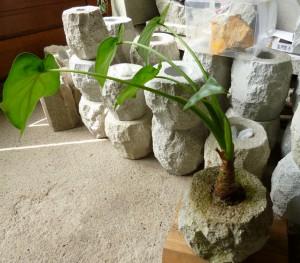 観葉植物 (1280x1122)